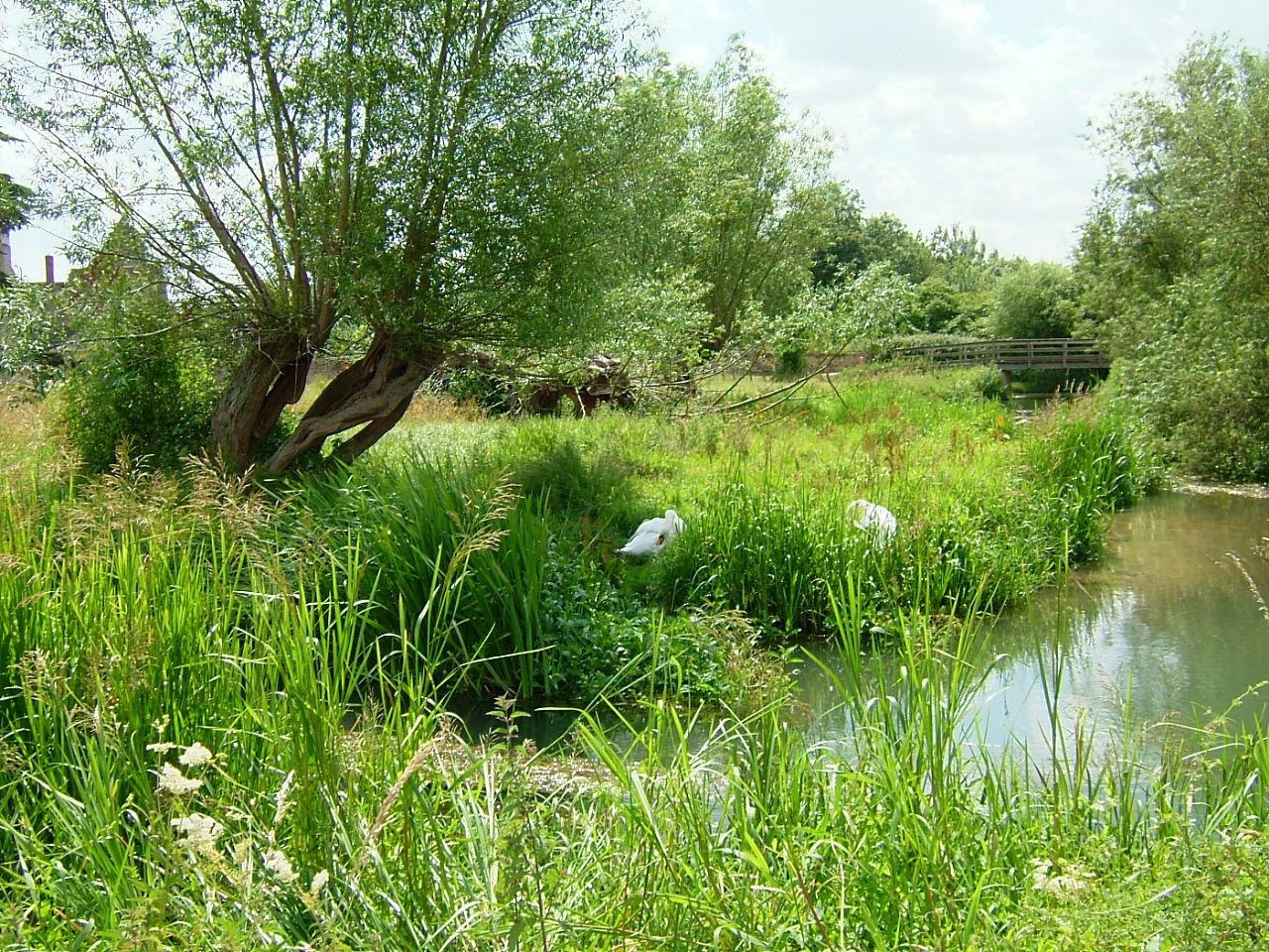 Langel Common & R Windrush