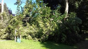 A large bough has fallen