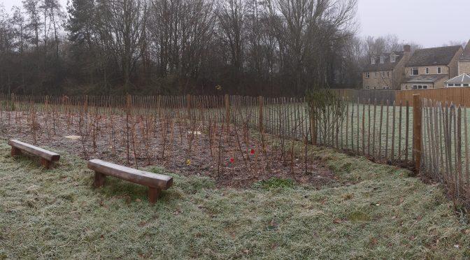 Witney Tiny Forest Winter Visit Jan 2021