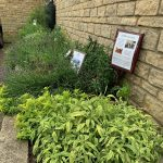 Edible Gardens, vegetable bed in Langdale Court